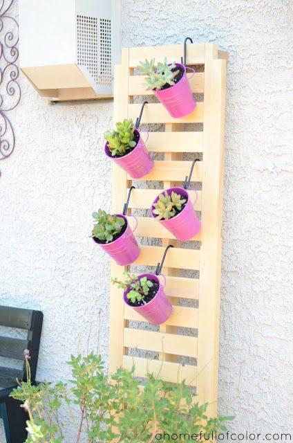 succulentshanging2