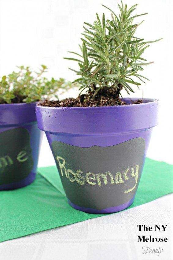 Indoor Herb Garden Growing
