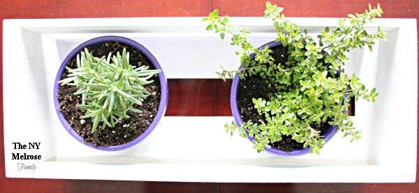 Indoor Herb Garden Planting
