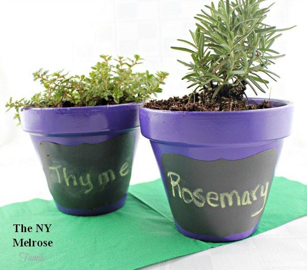 Indoor Herb Garden Potted