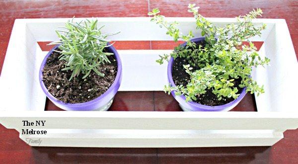 Indoor Herb Garden Table Centerpiece