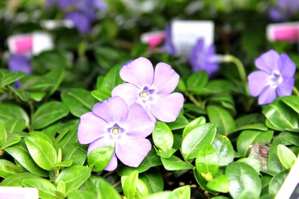 Gardening Tips - don't overwater