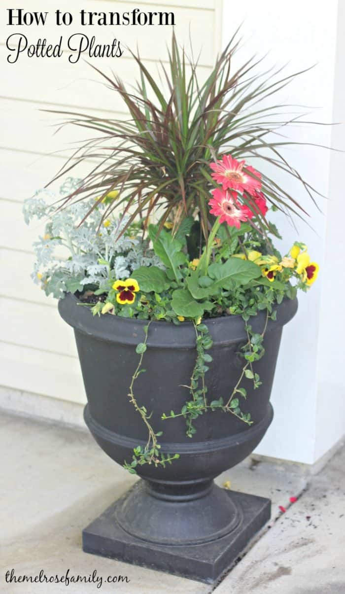 If you've struggled with how to create perfect potted plants then this how to is for you, even if you don't have a green thumb.