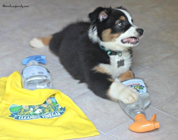 Tips for Pet Cleaning FB