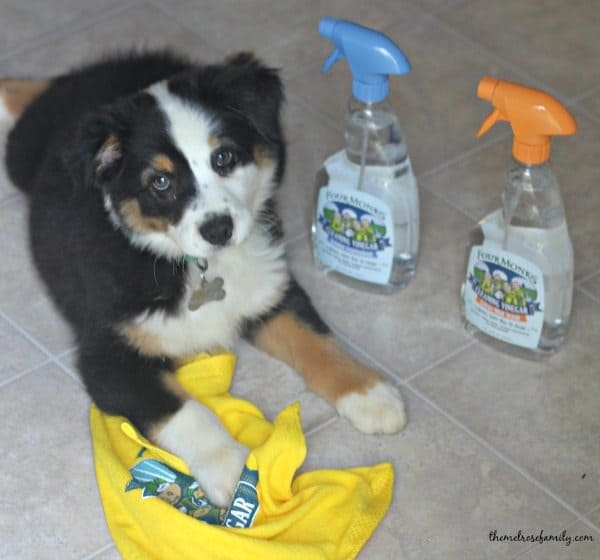 Tips for Pet Cleaning with Four Monks