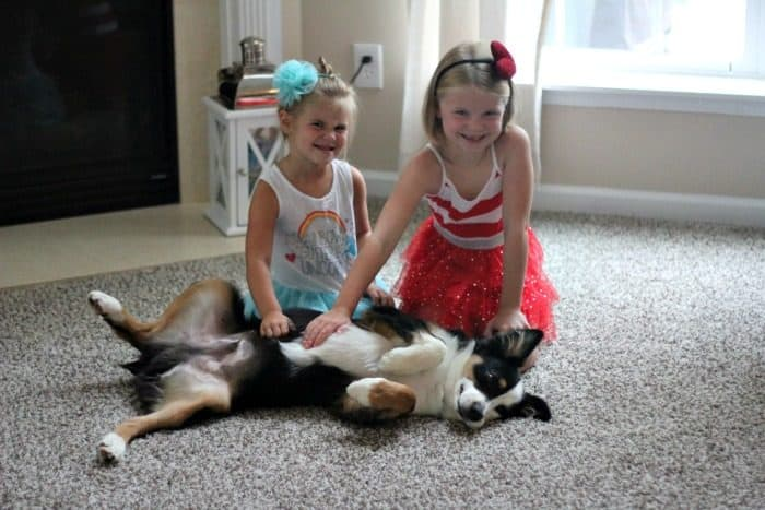Carpet Cleaning Tips with a kids and a dog